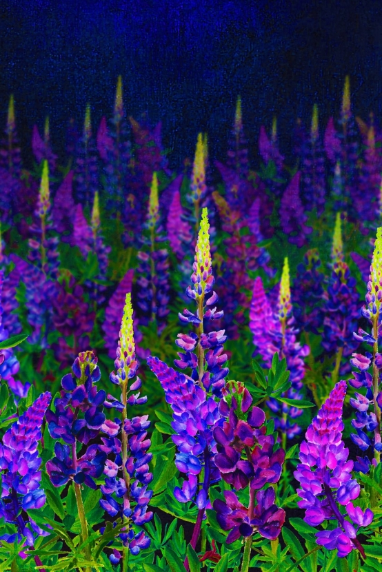 Dark blue fabric with painted lupins