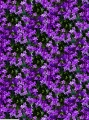 Fabric with purple flowers